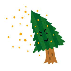 花粉を盛大に飛ばしている杉の木の画像です。